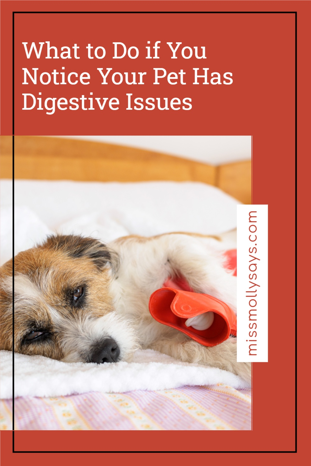 What to Do if You Notice Your Pet Has Digestive Issues