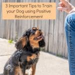 3 Important Tips to Train your Dog using Positive Reinforcement