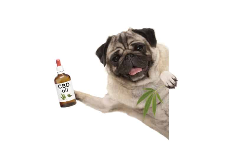 Dog holding CBD oil bottle