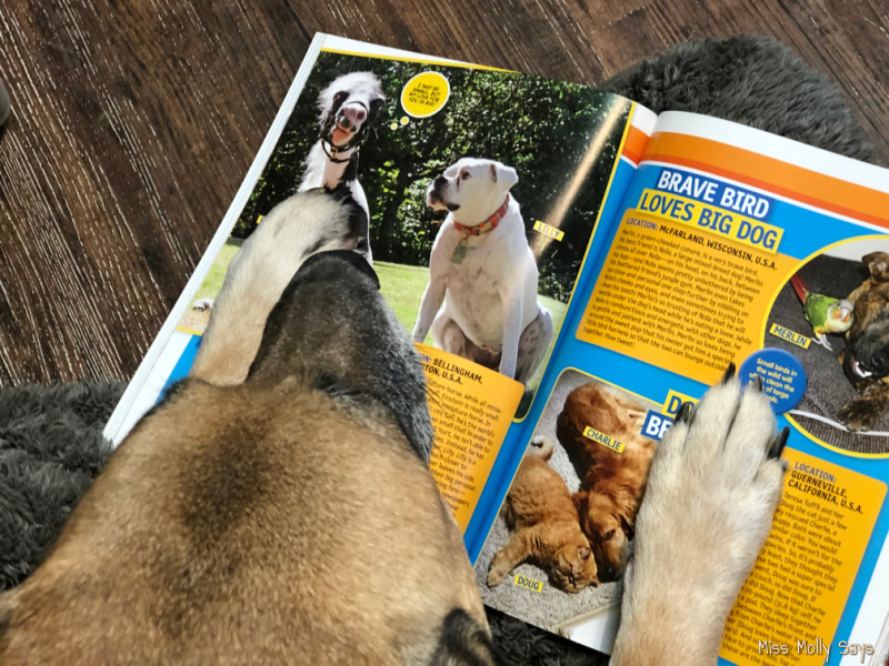 Tan German Shepherd in a red bandana with National Geographic Kids books