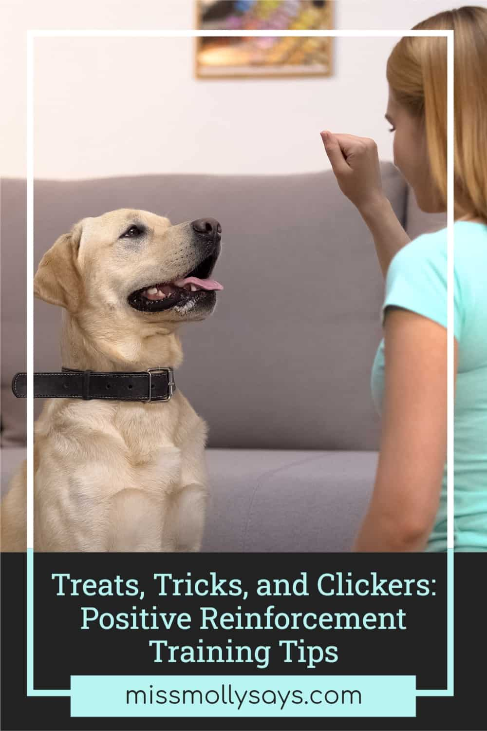 Treats, Tricks, and Clickers: Positive Reinforcement Training Tips