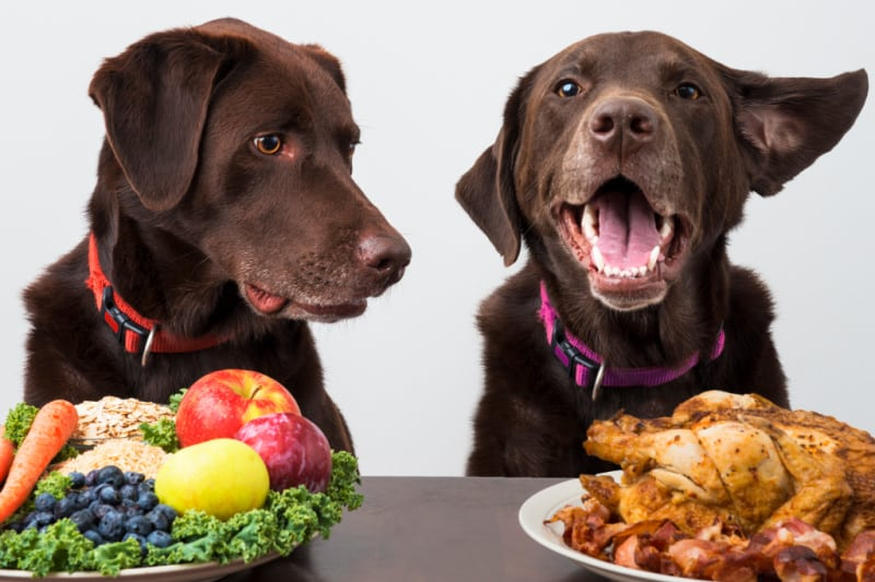 Two brown dogs with choice of either fruits or meat