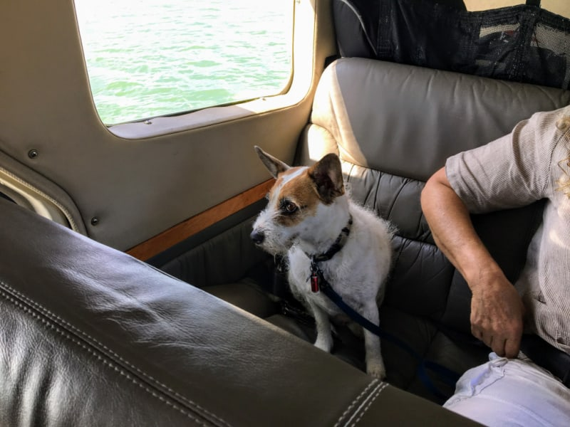 Dog sitting in seat on board a plane