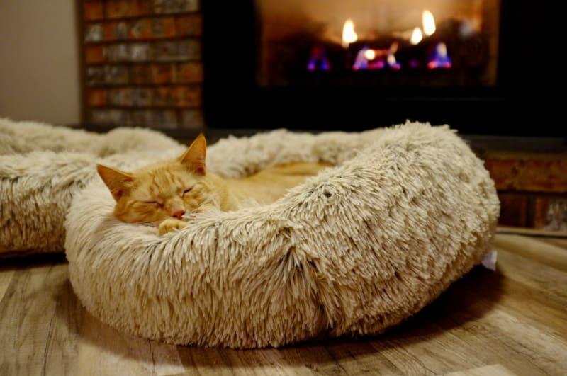 Orange cat sleeping in a round furry cat bed