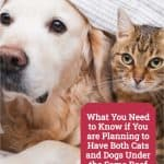 What You Need to Know if You are Planning to Have Both Cats and Dogs Under the Same Roof