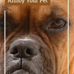 5 Things That Annoy Your Pet