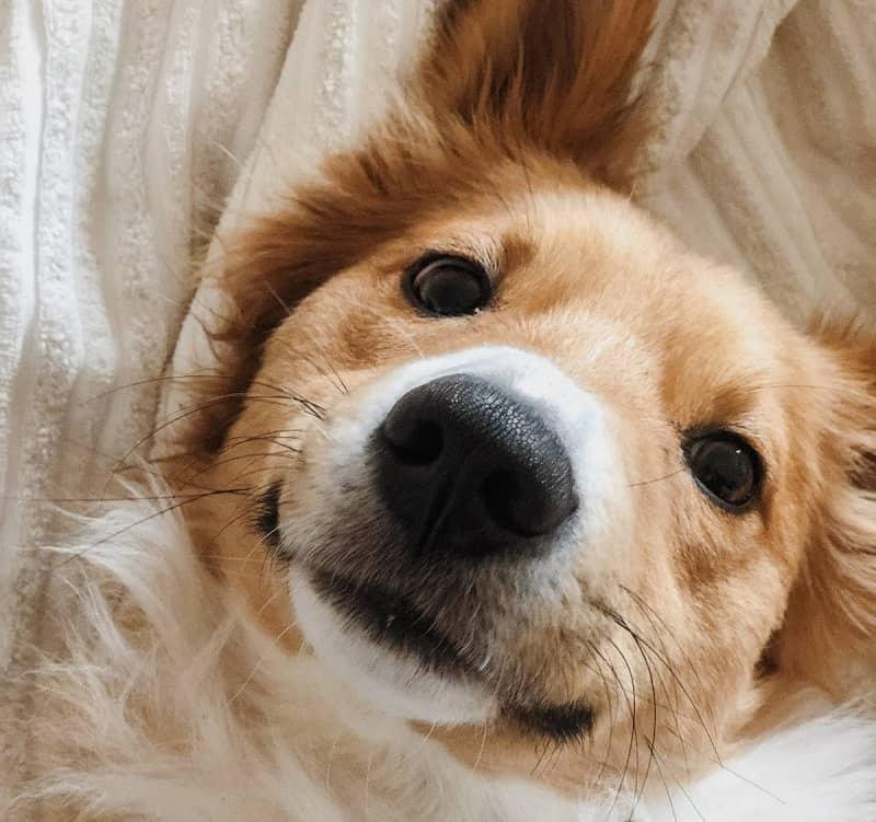 Cute happy dog