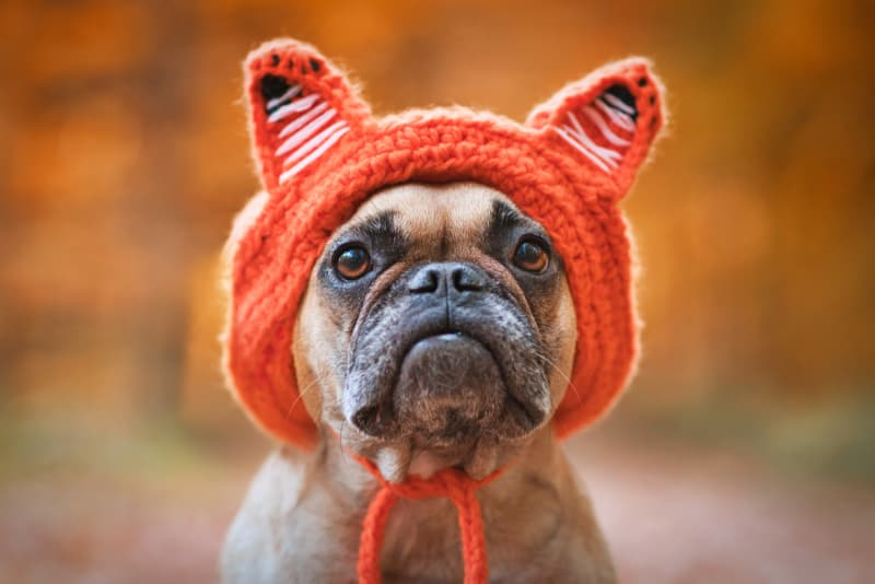 Dog with funny hat
