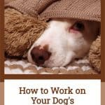 How to Work on Your Dog's Separation Anxiety