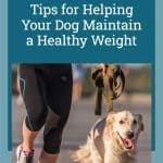 Tips for Helping Your Dog Maintain a Healthy Weight