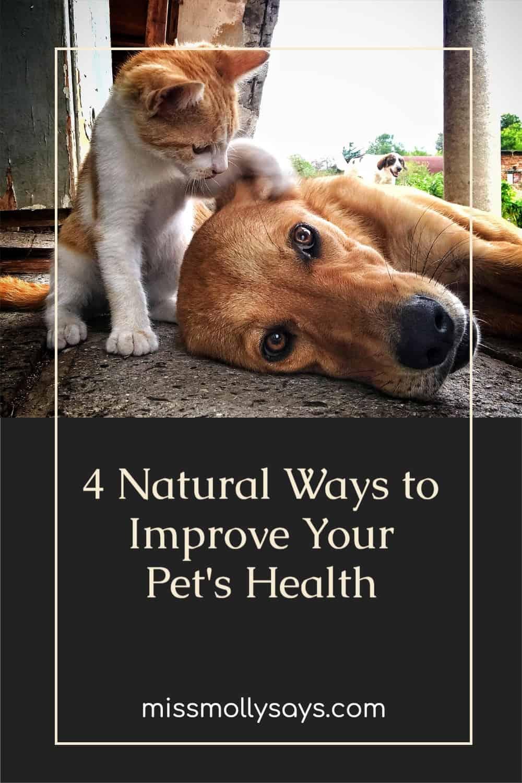 4 Natural Ways to Improve Your Pet's Health