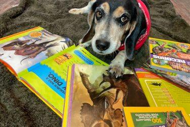 Beagle looking at Nat Geo DinoMANIA book