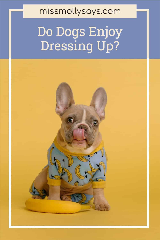 Do Dogs Enjoy Dressing Up?