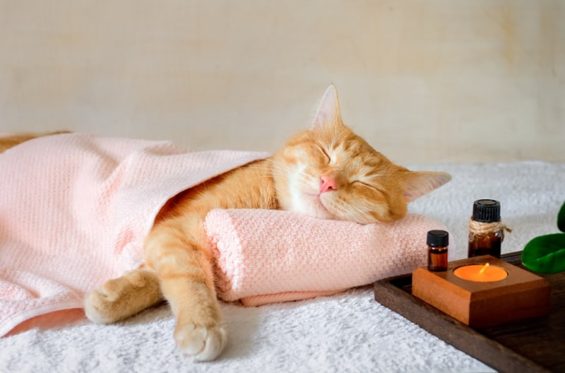 Orange cat laying on pillow getting a massage