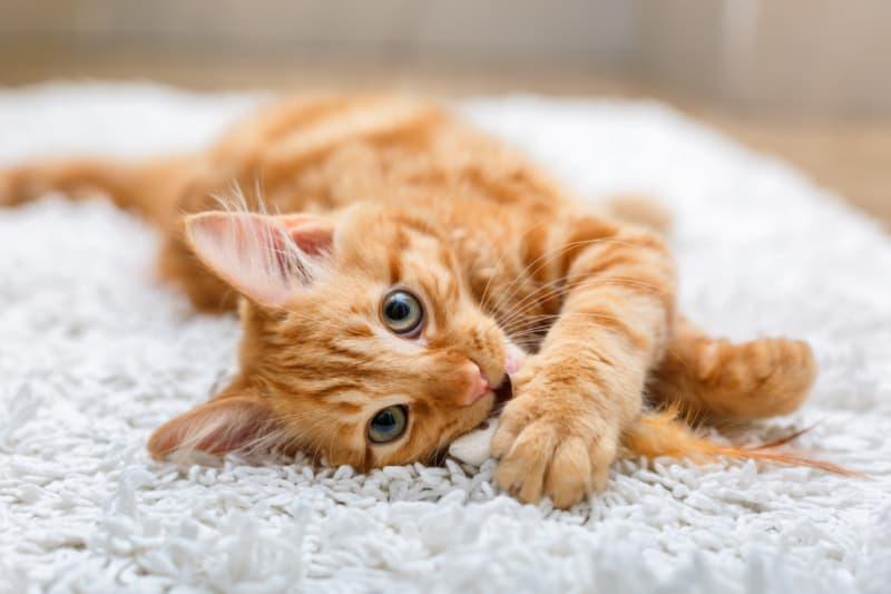 Orange kitty laying on a shaggy rug