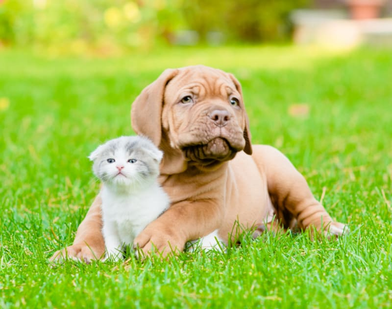 Puppy and kitten sitting on the grass together
