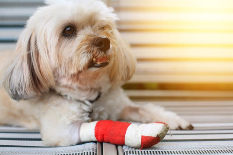 4 Essentials for Stocking Your Pet's First Aid Kit