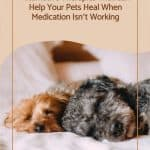 Alternative Therapies That Can Help Your Pets Heal When Medication Isn't Working