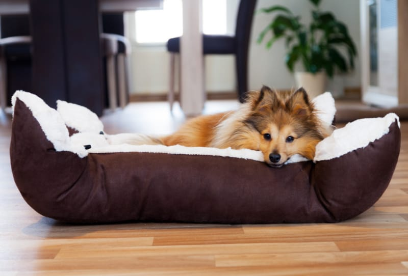Dog laying in a brown dog bed