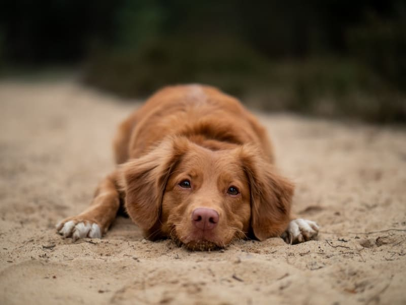 Is Your Dog Dreading the Heat? 4 Tips for Helping Your Pets Cool off This Summer