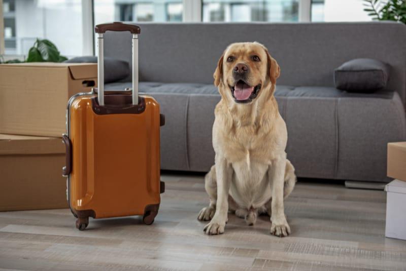 Dog sitting by suitcase