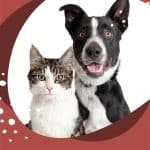 How to Get High-Quality Portraits of Your Dog or Cat