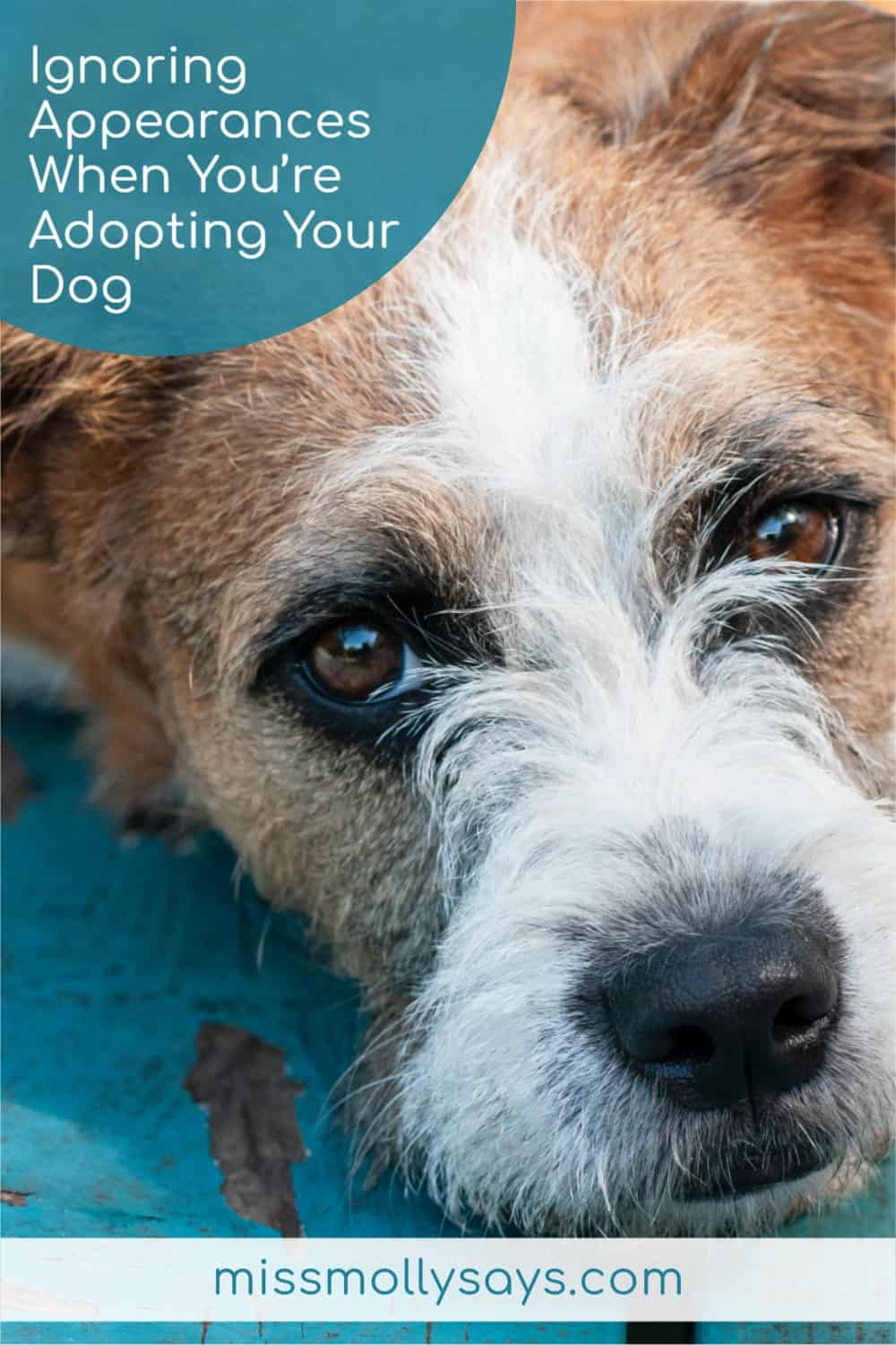 Ignoring Appearances When You're Adopting Your Dog