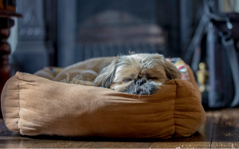 Small dog sleeping in a cushioned dog bed
