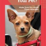 Traveling With Your Pet? Make Sure You Avoid These Mistakes