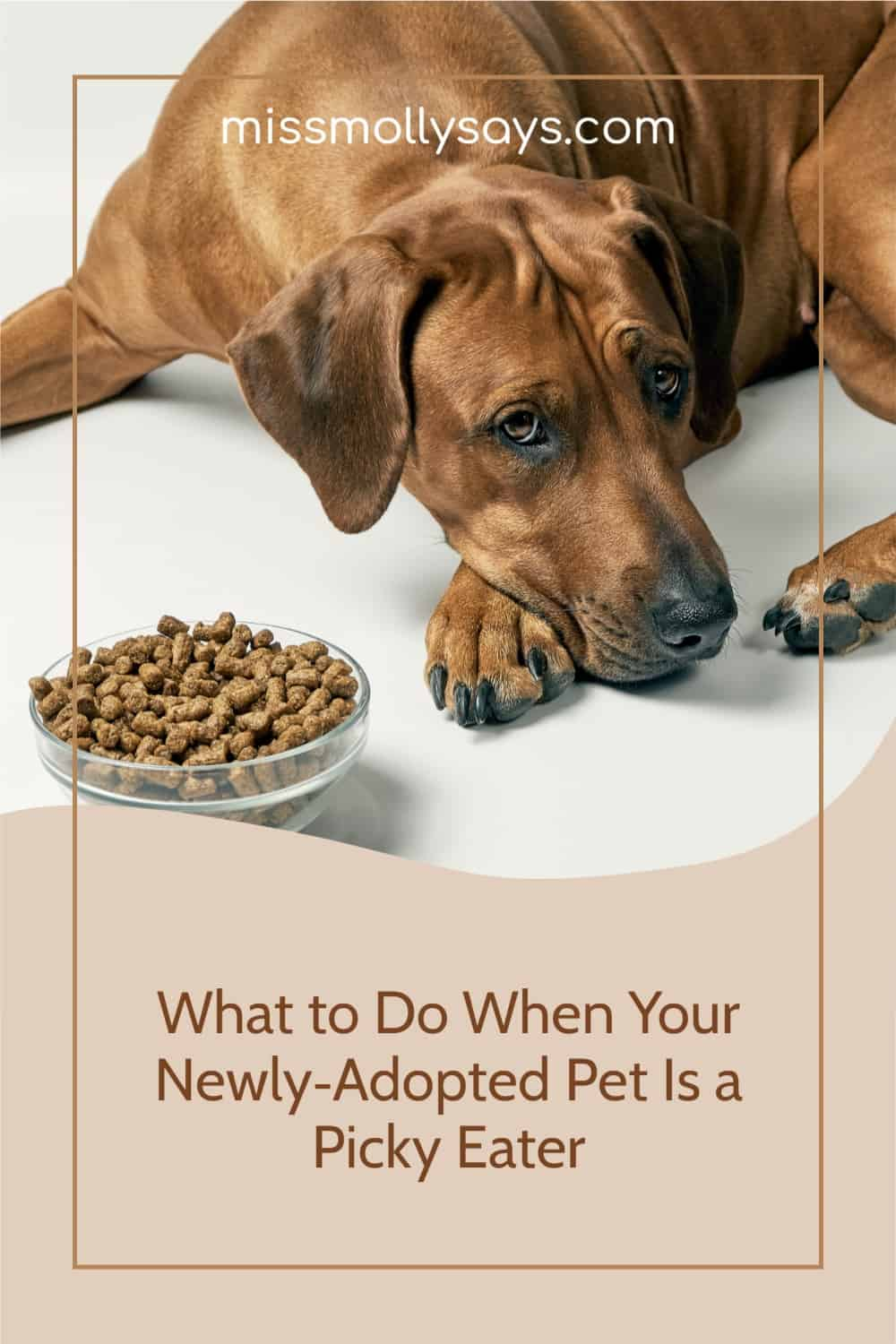 What to Do When Your Newly-Adopted Pet Is a Picky Eater