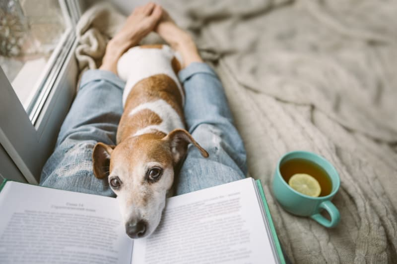 Woman laying on couch with book and small dog on her legs