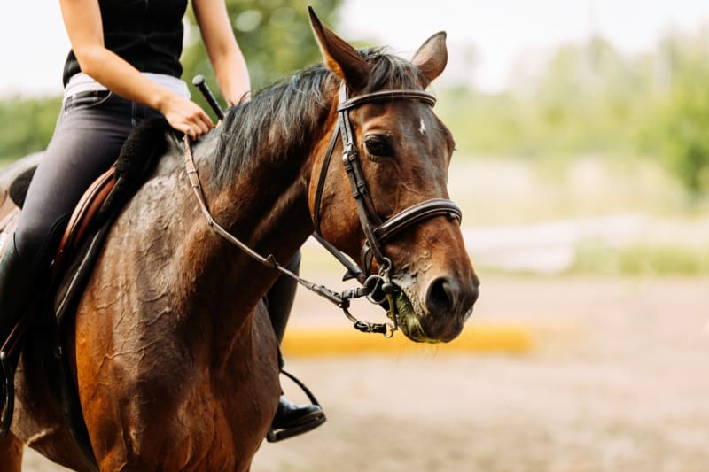Picture of young pretty girl riding her horse