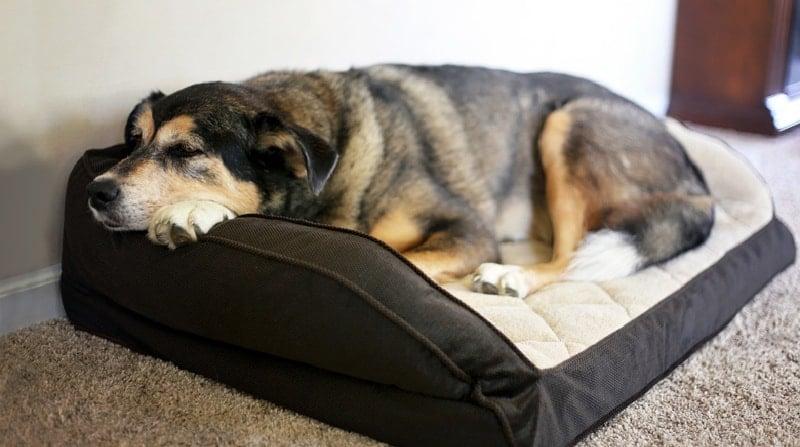 Dog sleeping on a rectangle shaped dog bed
