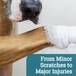 From Minor Scratches to Major Injuries: How to Help and Handle an Injured Pet