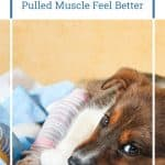 How to Help a Dog With a Pulled Muscle Feel Better