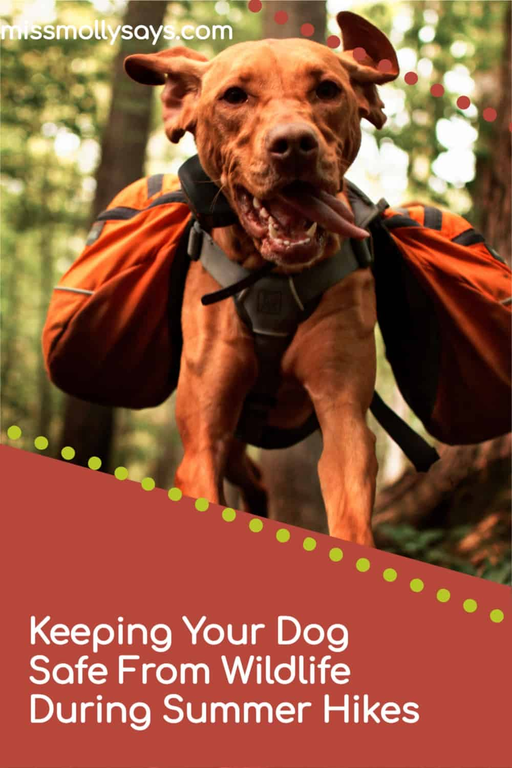 Keeping Your Dog Safe From Wildlife During Summer Hikes