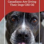 Reasons Why Canadians Are Giving Their Dogs CBD Oil