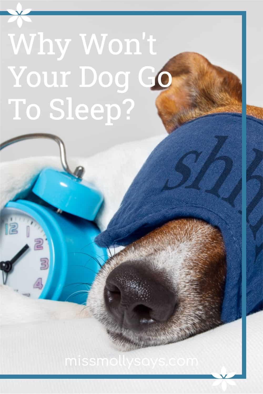 Why Won't Your Dog Go To Sleep?