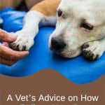 A Vet's Advice on How to Relieve Your Dog's Arthritis