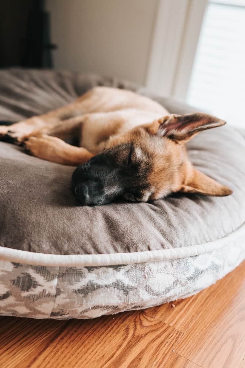 Dog sleeping on a fluffy round dog bed
