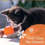 First-Time Pet Owners: Essential Tips For When You Bring Home A Kitten