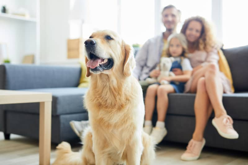 How To Keep Your Dog Healthy When You Can't Go To The Vet