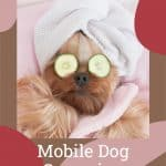Mobile Dog Grooming In Miami