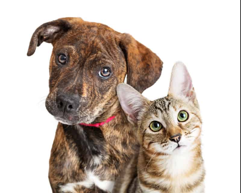 Portrait of a dog and a cat