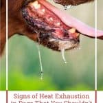 Signs of Heat Exhaustion in Dogs That You Shouldn't Ignore