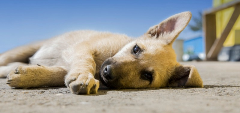 Small puppy laying on the sand