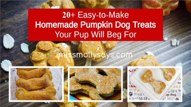 20+ Easy-to-Make Homemade Pumpkin Dog Treats Your Pup Will Beg For