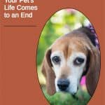 4 Things To Expect As Your Pet's Life Comes to an End
