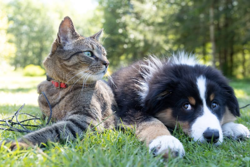 A cute dog and cat laying together in the grass